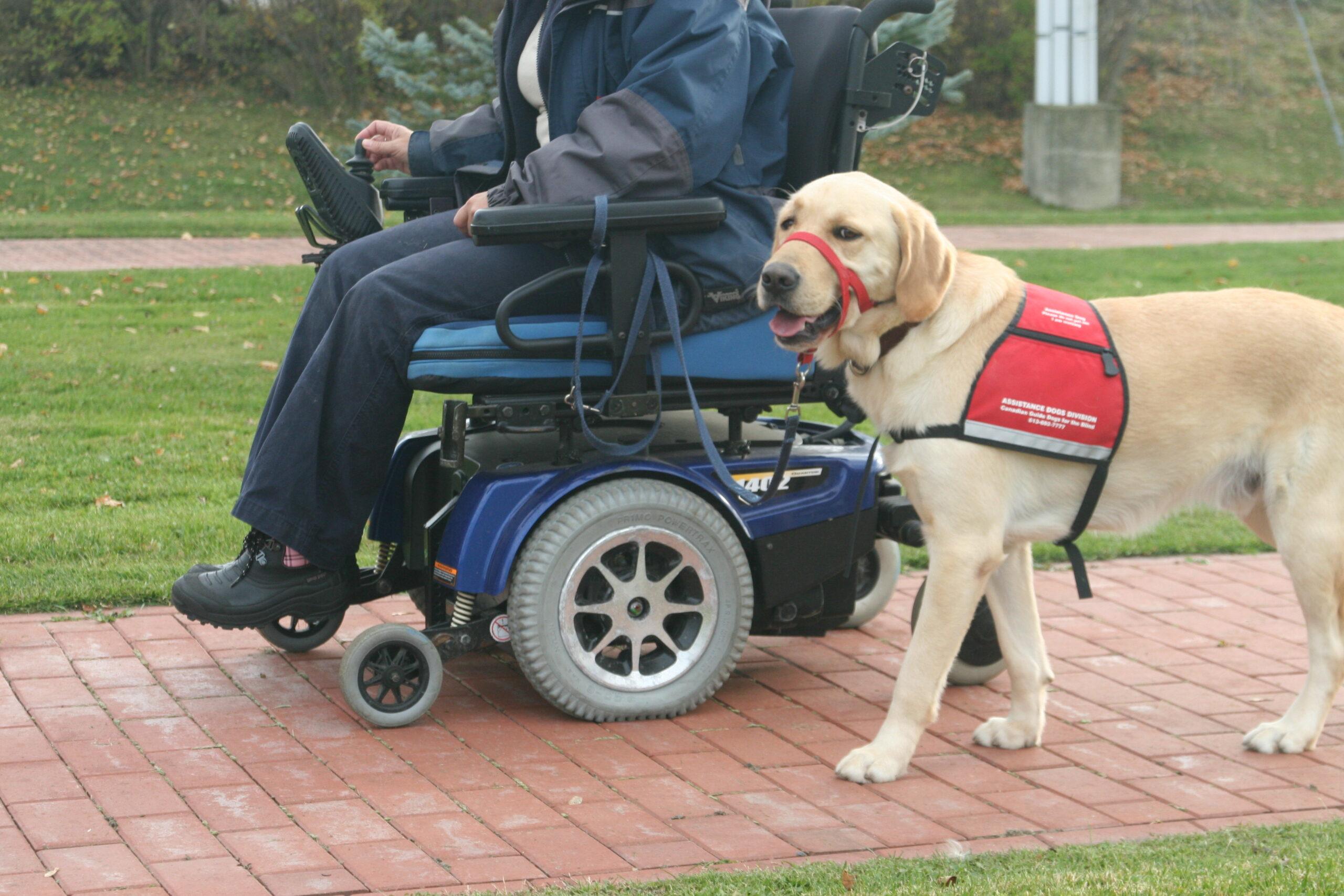 Handicapé, pénalisé, mais prêt à se battre